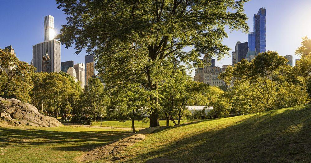 Summer in NYC at Central Park near the Knickerbocker Hotel.