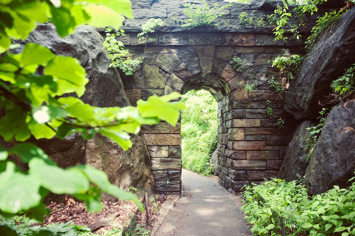 Things-to-Do-in-Central-Park-The-Ramble